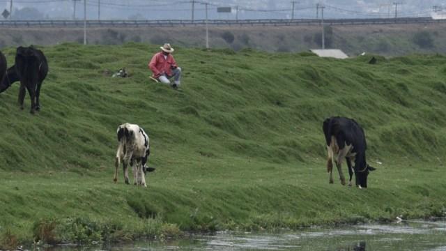 Miles de cabezas de ganado podrían morir de hambre por coronavirus en Morelos