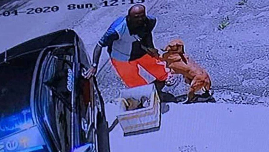 Imágenes de un video de circuito cerrado en el que un hombre, aparentemente, abandona a una perra embarazada y a sus crías en un estacionamiento