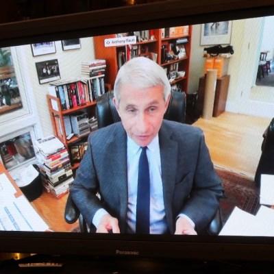 Reapertura en EEUU podría causar sufrimiento y muerte, dice especialista Fauci
