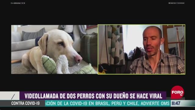 videollamada de dos perros con su dueno se hace viral