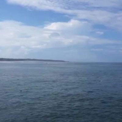 VIDEO: Pescadores de Oaxaca avistan tiburón ballena, el pez más grande del mundo