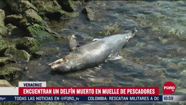 FOTO: encuentran delfin muerto en veracruz