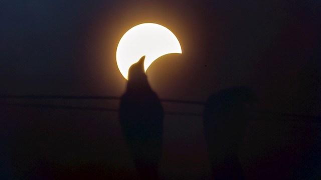 Fotografía que muestra la silueta de un pájaro parado en un cable de luz mientras ocurre un eclipse solar parcial en Mumbai, India. (Foto: EFE)