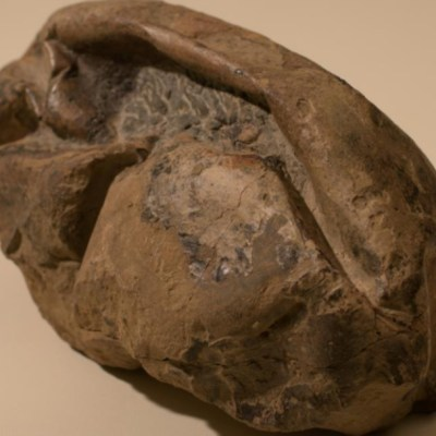 Hallan en Antártida fósil de huevo más grande de era de los dinosaurios