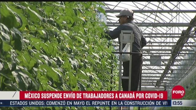 FOTO: mexico suspende envio de trabajadores agricolas en granjas de canada con covid