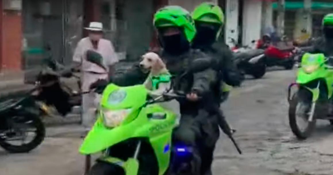 Perrita Abandonada Rescate Policía Colombia Antioquía