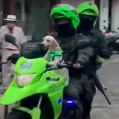 Video: Perrita se convierte en 'policía' después de ser rescatada del abandono