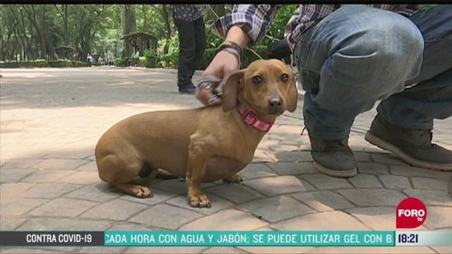 FOTO: quien cuida a las mascotas de los medicos podrian sufrir depresion
