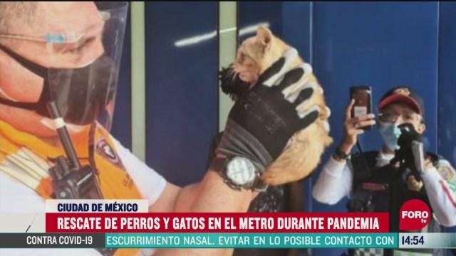 FOTO: rescatan perros y gatos en el metro durante pandemia