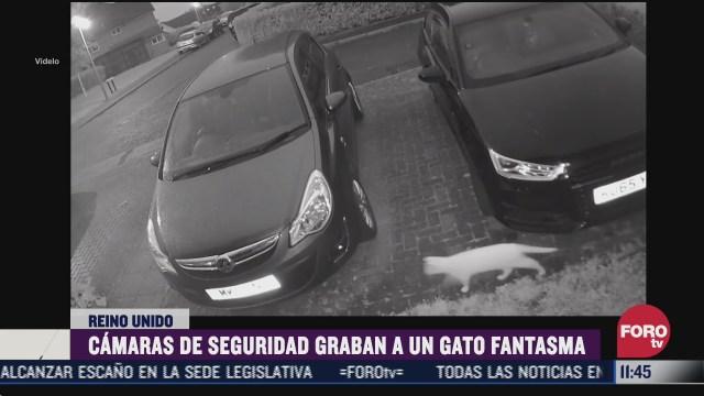 camaras de seguridad graban un gato fantasma en reino unido