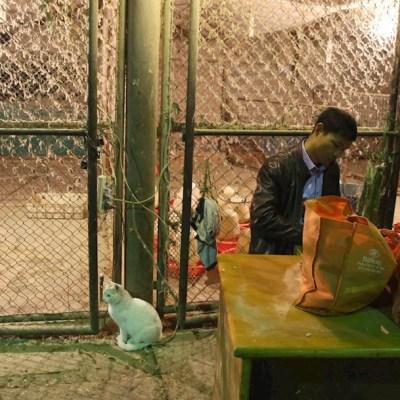 China cerrará gradualmente todos los mercados donde se venden aves vivas.