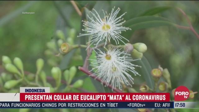 crean collar de eucalipto que supuestamente elimina el coronavirus