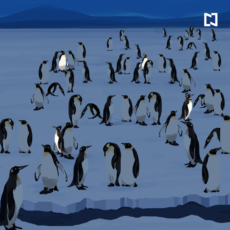 Encuentra a 4 pingüinos con sombrero