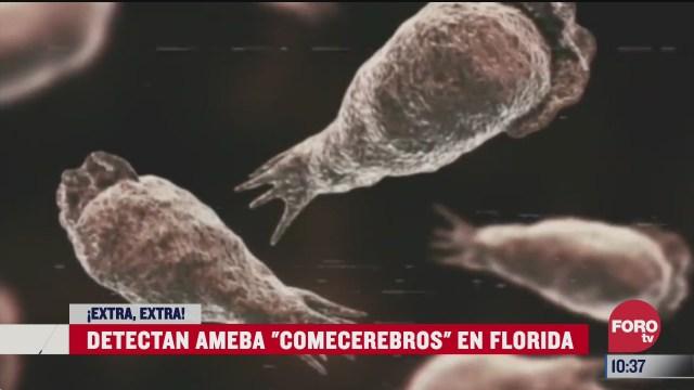 extra extra detectan ameba comecerebros en florida