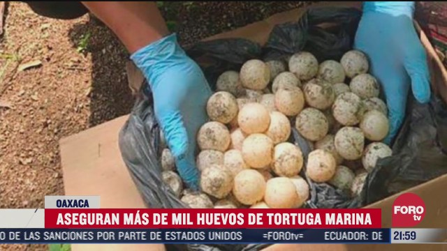 FOTO: 18 de julio 2020, guardia nacional recupera huevos de tortuga marina en oaxaca