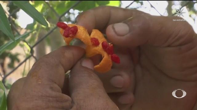medicina naturalen comunidades mayas para pacientes con coronavirus covid 19