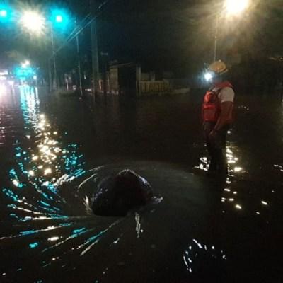 Intensas lluvias causan caída de árboles e inundaciones en Guadalajara y Monterrey