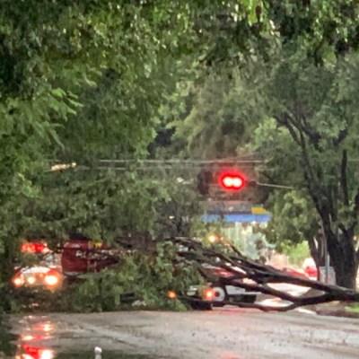 Fuerte lluvia en Zona Metropolitana de Guadalajara deja encharcamientos y árboles caídos
