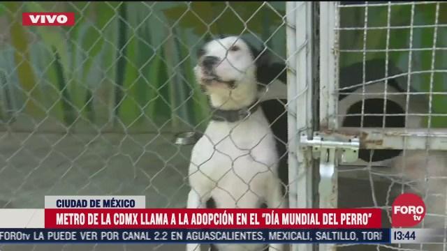 metro de la cdmx llama a la adopcion en el dia mundial del perro