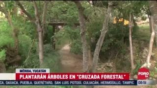 FOTO: 4 de julio 2020, plantaran arboles en cruzada forestal en merida yucatan