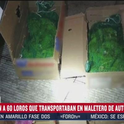 Rescatan a loros que eran transportados en un autobús