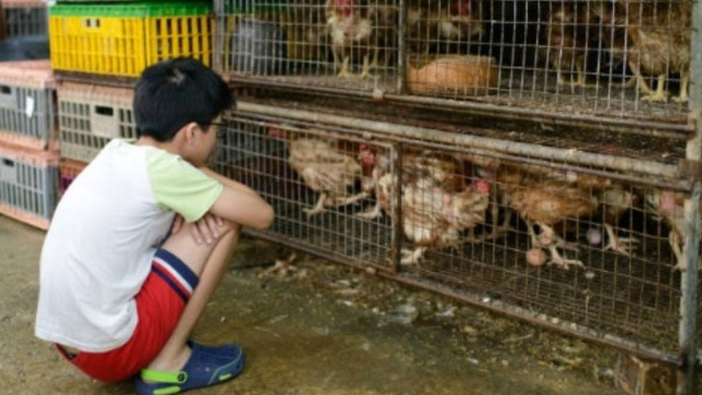 China-restringe-comercio-y-sacrificio-de-aves-vivas
