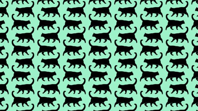 Encuentra a los gatitos con cascabel