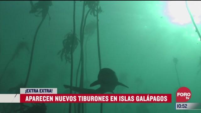 extra extra aparecen nuevos tiburones en islas galapagos