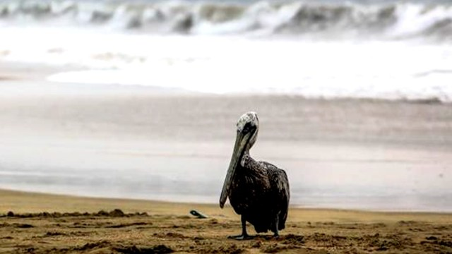 'Genevieve' se acerca a Los Cabos, BCS; autoridades instalan 175 refugios