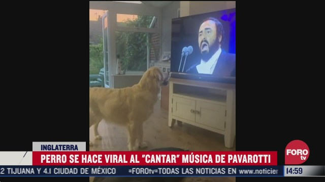 perrito canta al ritmo de pavarotti