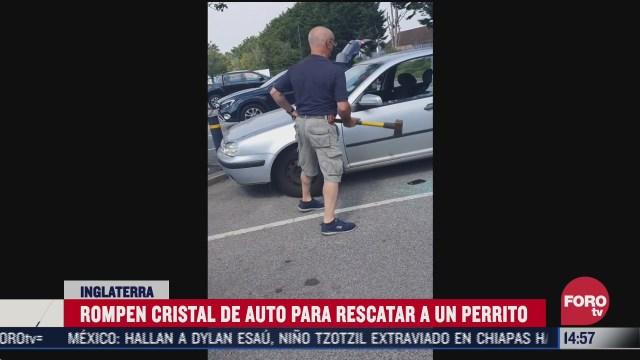 rompen con hacha vidrio de auto para rescatar a perrito