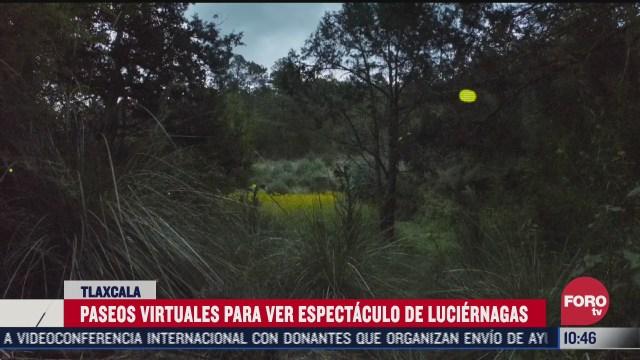 transmitiran avistamiento de luciernagas en tlaxcala