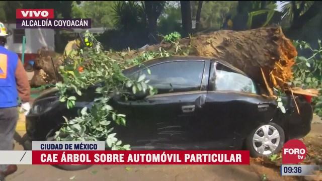 un enorme arbol cae sobre automovil en la alcaldia coyoacan