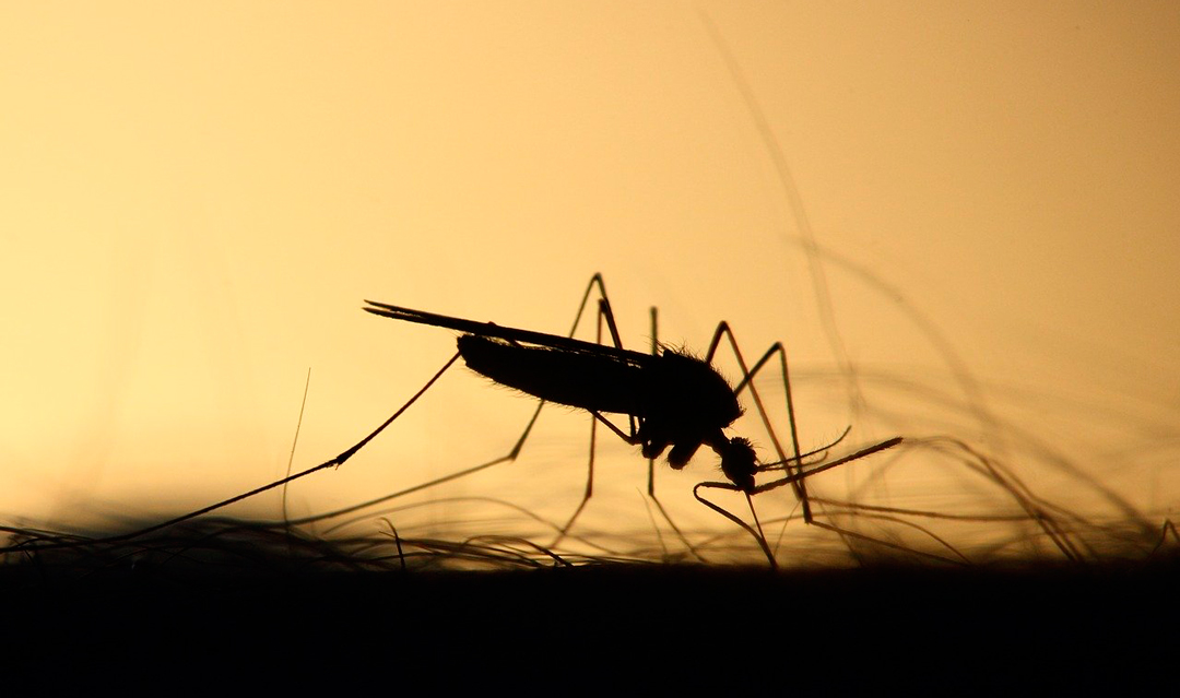 Cómo hacer repelentes naturales para alejar a los mosquitos