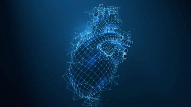 Descubren cuáles son las células encargadas de reparar el corazón tras un infarto