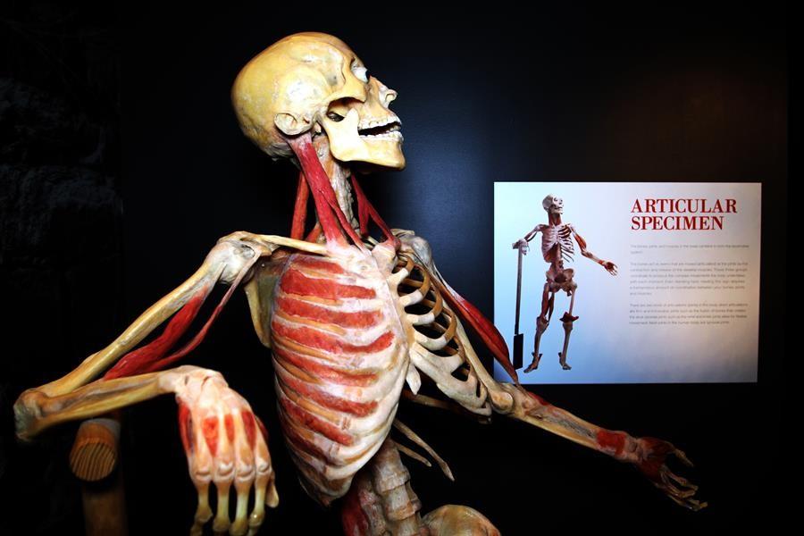 Bodies-exhibición-de-cuerpos-expone-efectos-de-COVID-19