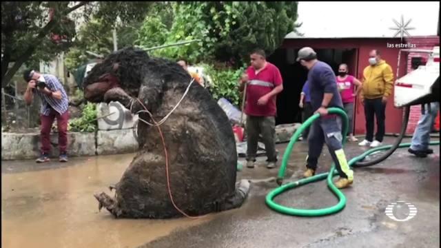 hallan botarga de rata entre basura en arroyo de la alcaldia magdalena contreras
