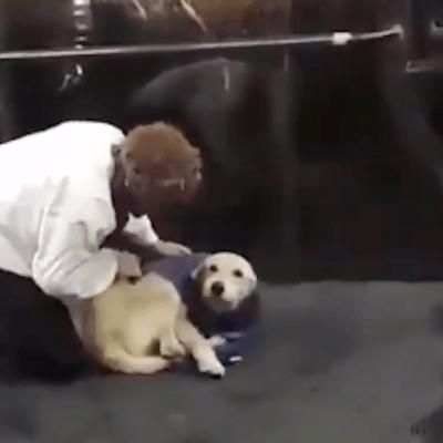 Video: Hombre se quita chaleco para abrigar a perrito y se viraliza