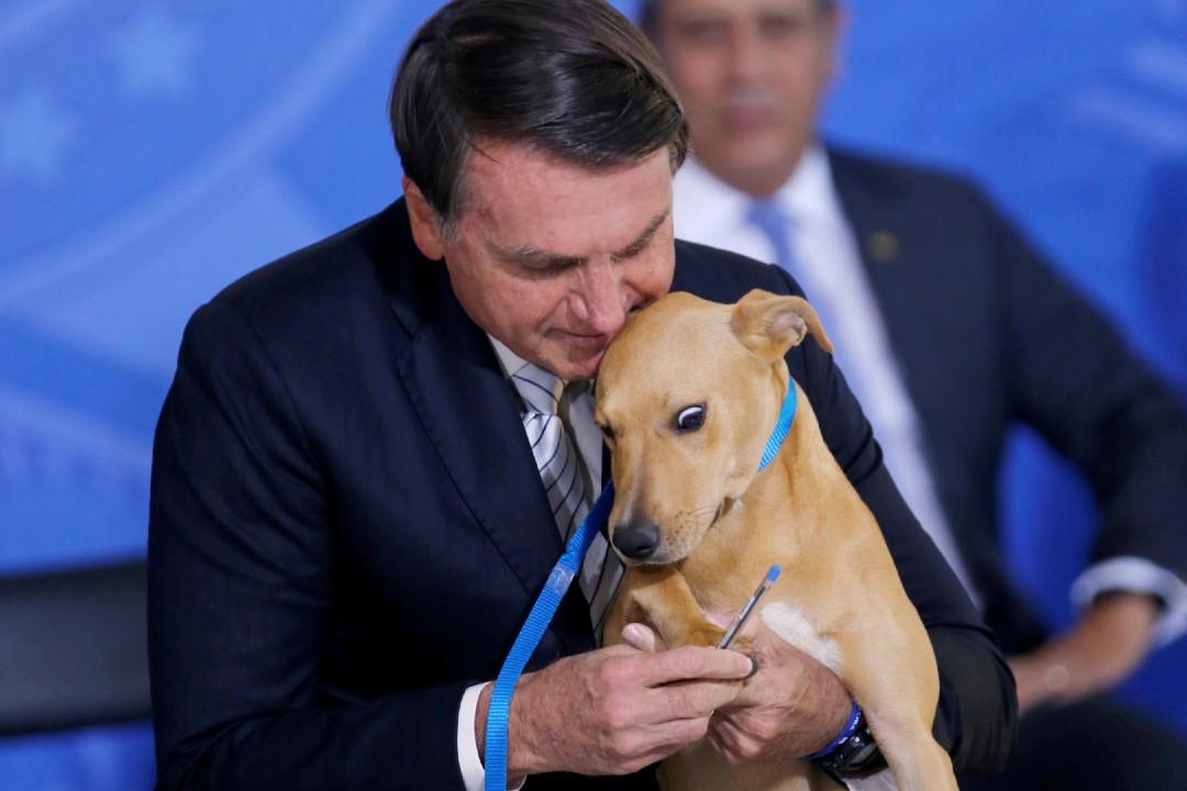 Bolsonaro-aprueba-ley-que-endurece-penas-por-maltrato-animal