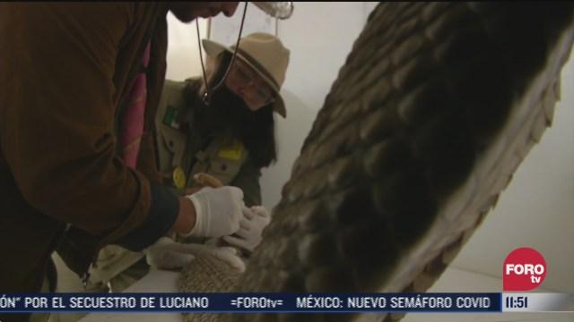 manejo y conservacion de serpientes