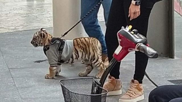 Podrían-sancionar-a-centro-comercial-por-cachorro-de-tigre