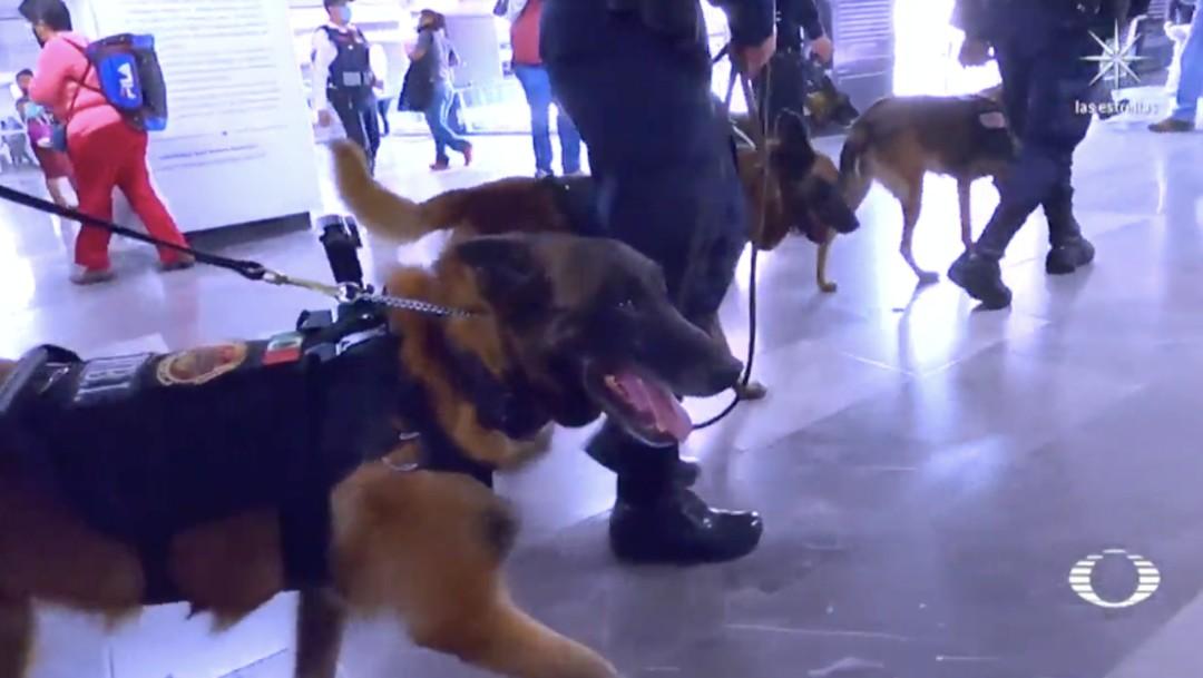 Perros adiestrados buscan en el Metro CDMX drogas, armas y hasta explosivos