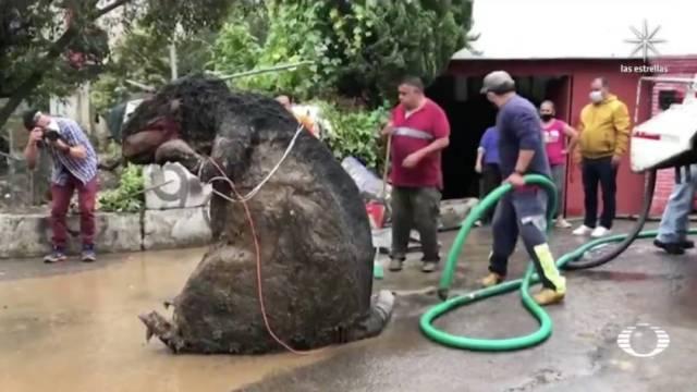 La botarga de rata gigante formaba parte de un tapón de basura que obstruía el Río Magdalena