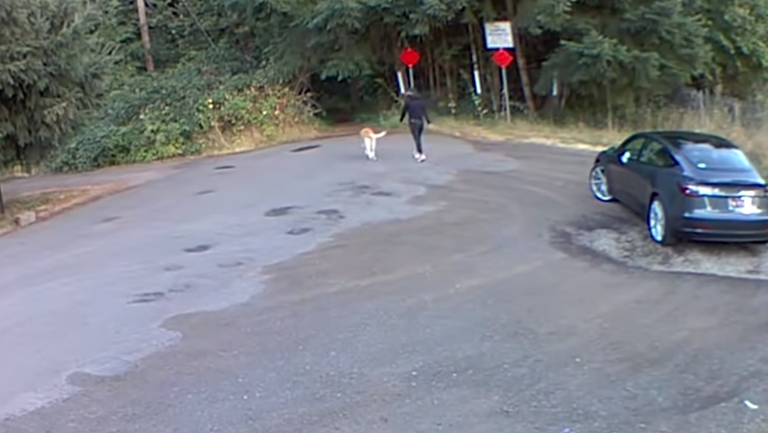 Un video viral despertó la indignación en el que muestra el momento en el que mujer abandona a un perrito, Henry, en el bosque, Captura De Pantalla