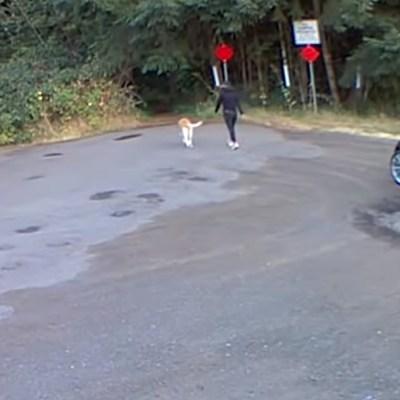 Video muestra el momento en el que mujer abandona a un perrito en el bosque