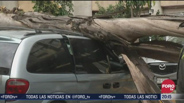 cae arbol sobre autos en tlatelolco cdmx