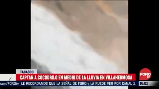 captan a cocodrilo en medio de la lluvia en tabasco