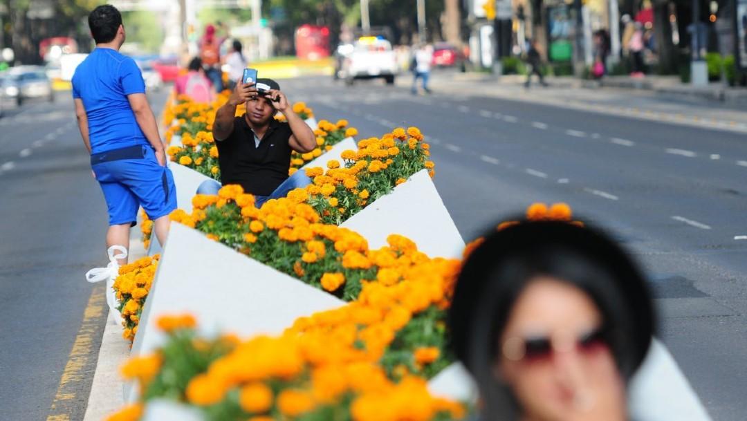 Miles de flores de cempasúchil adornarán los camellones de la Ciudad de México