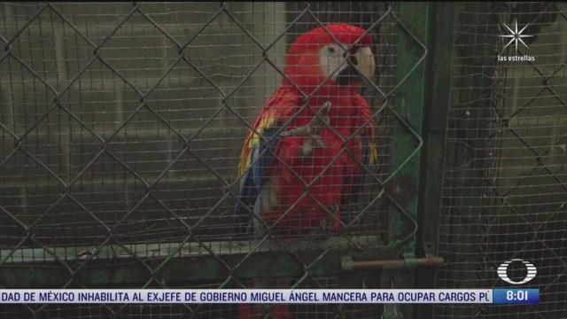 el regreso de la guacamaya roja a los tuxtlas veracruz
