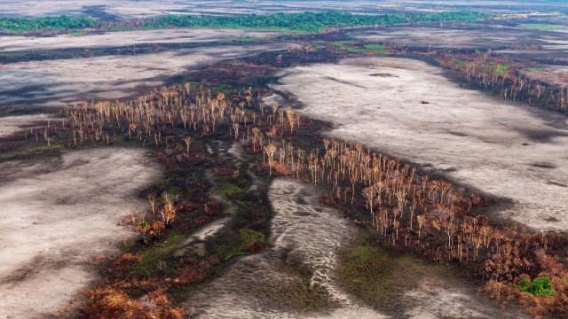 En Brasil no hay 'ni una hectárea' de selva devastada: Bolsonaro